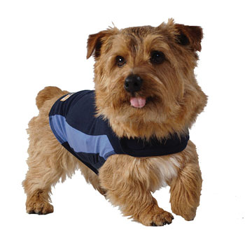 Will Thundershirt Help Separation Anxiety